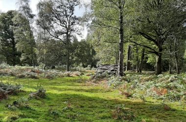 Pamber Forest Open Wood